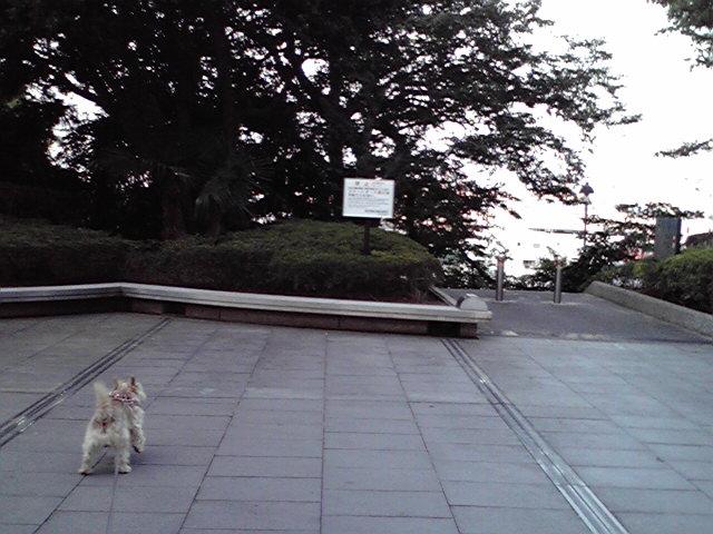 9月13日shopping<br />  犬