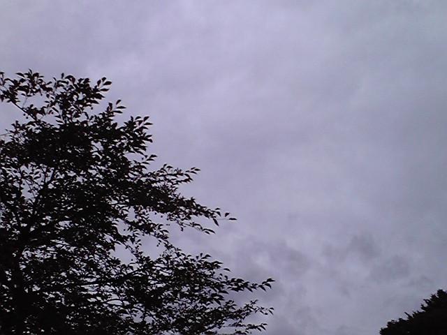 9月19日雨のち晴れ犬