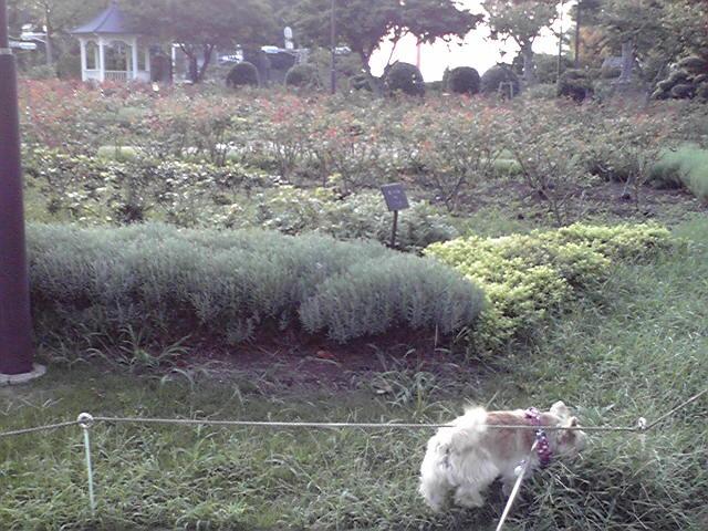 9月21日秋犬