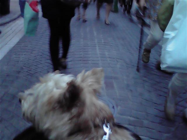 9月22日チャーミング犬