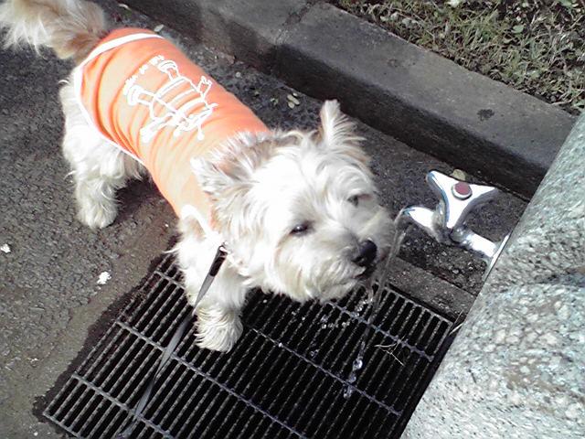 9月28日涼しい犬