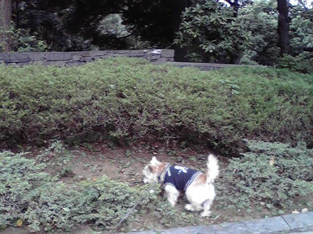 9月28日風犬