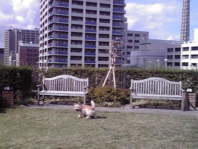 9月30日暑い犬