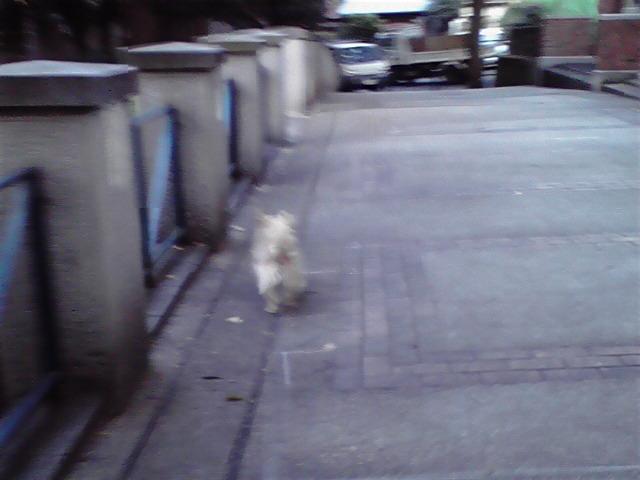10月2日秋犬