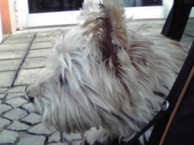 10月7日海の犬