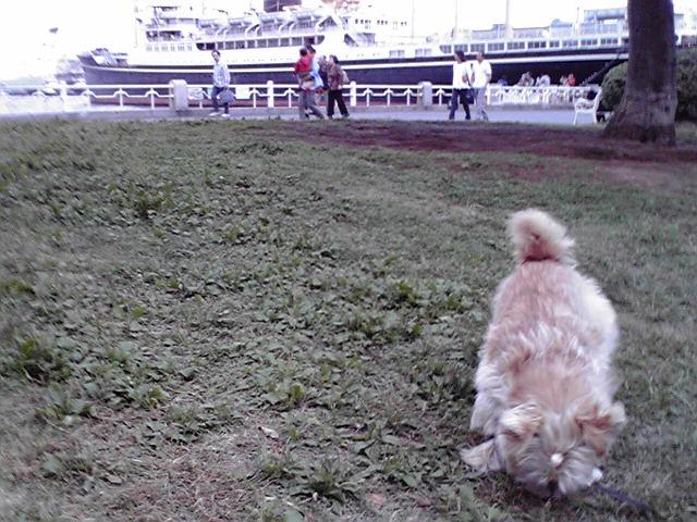 10月8日ゴミ犬