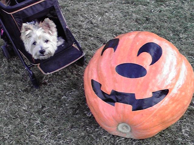 10月10日秋犬