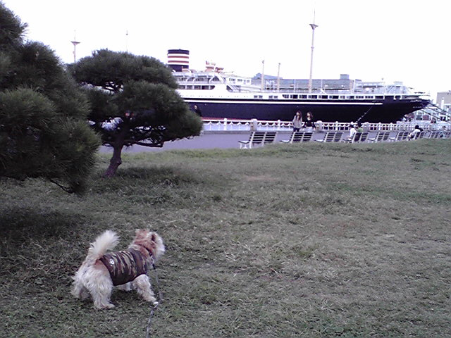 10月11日取材犬