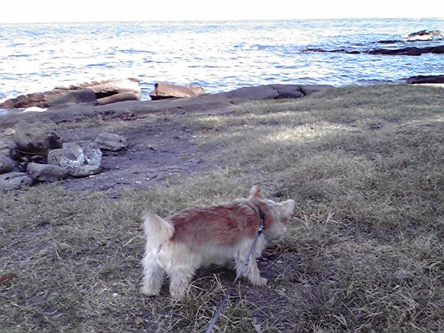 10月13日旅犬