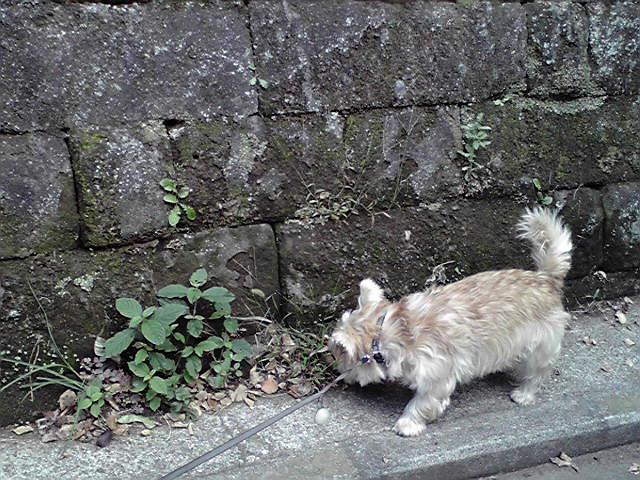 10月15日夕焼け犬