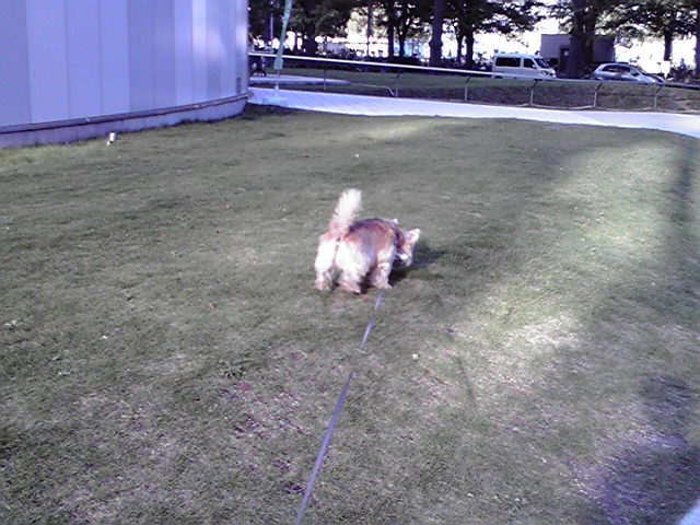 10月16日流浪の犬