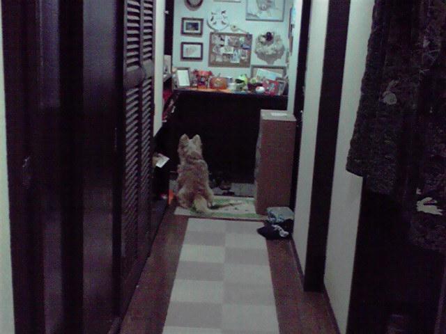 10月17日待つ犬