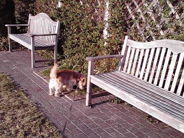 10月22日匂い犬