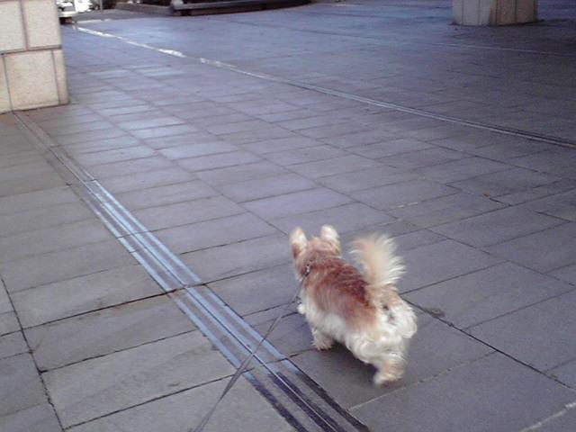 10月24日冬が始まる犬