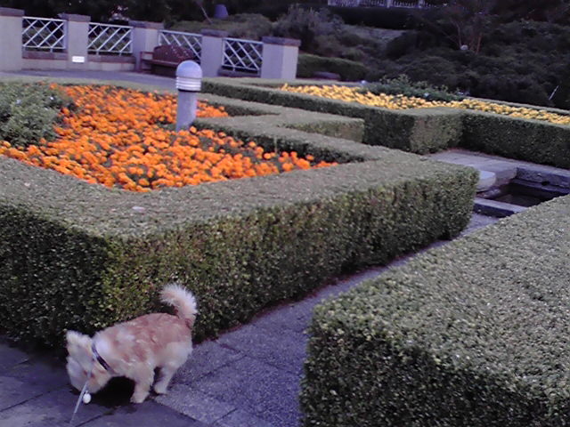 10月25日検査犬