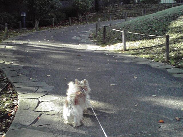 11月1日冬犬