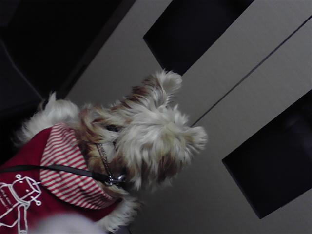 11月7日クリスマス犬