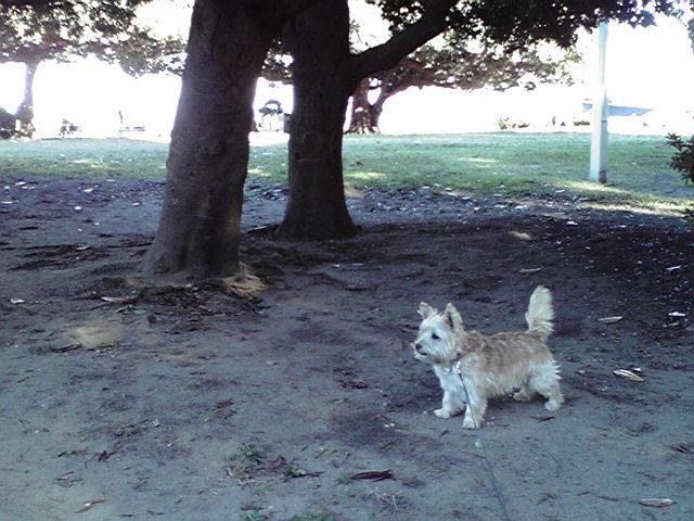 11月10日紅葉犬