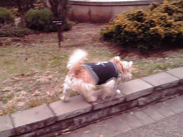 11月11日バラ犬