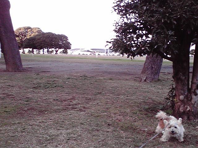 11月13日冬犬