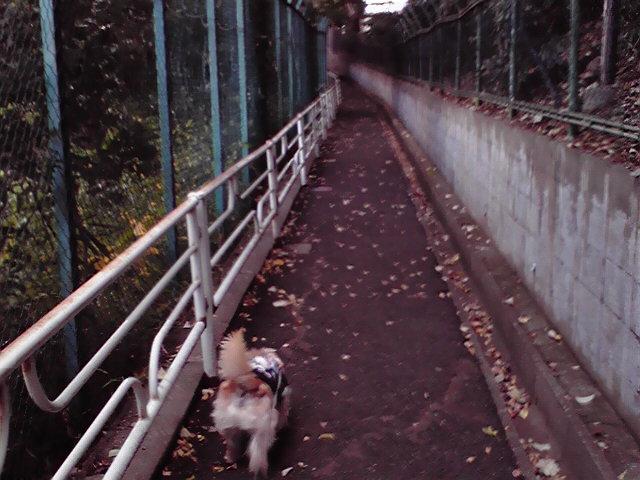 11月14日働く犬