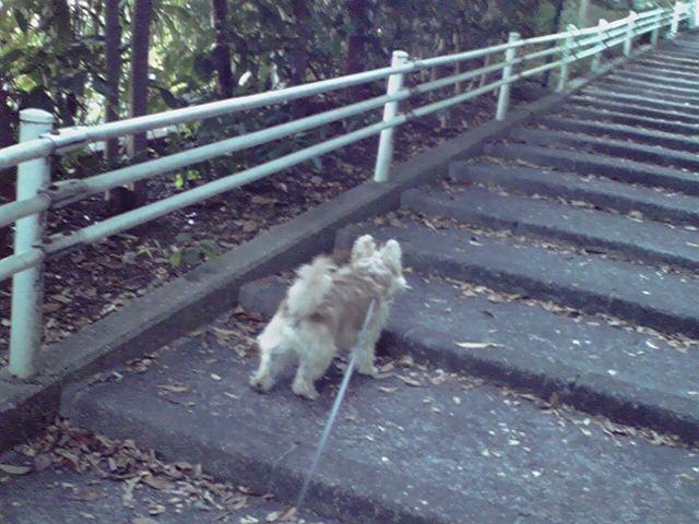 11月15日夕映え犬