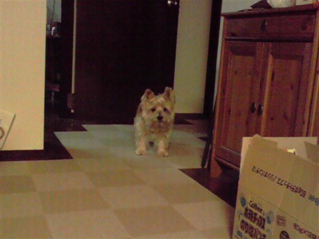11月17日風雨犬