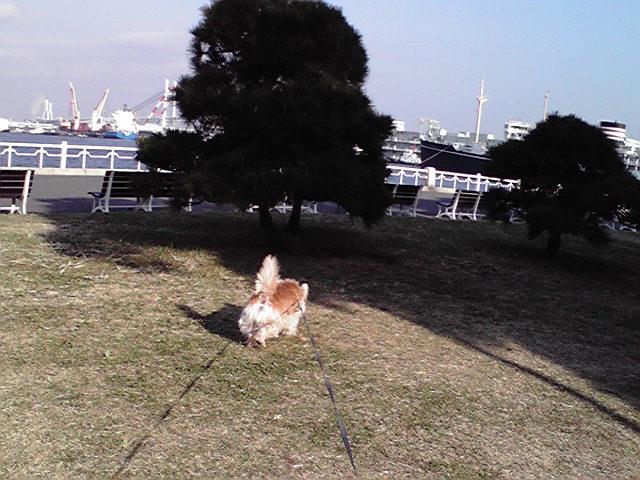 11月19日ストーブ犬