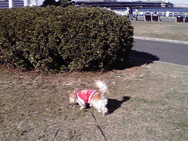 11月21日秋の犬