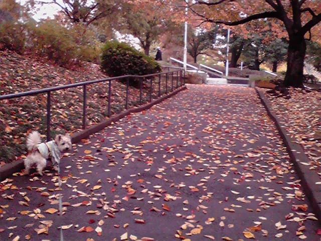 11月23日秋雨犬