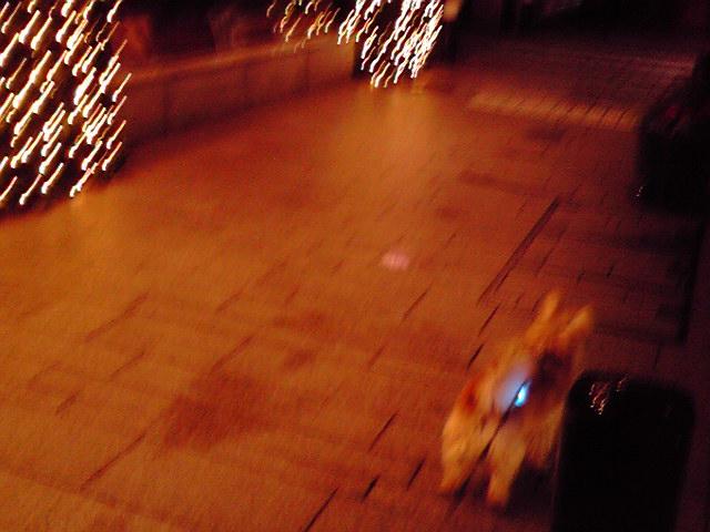 11月26日ポカスカ犬