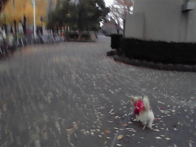 12月1日師走犬