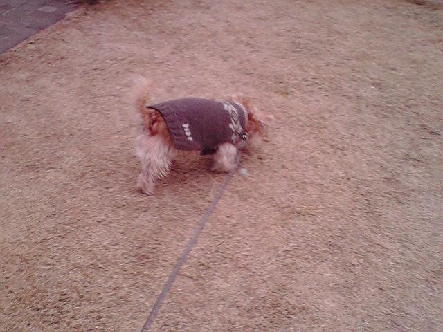 12月2日寒い犬