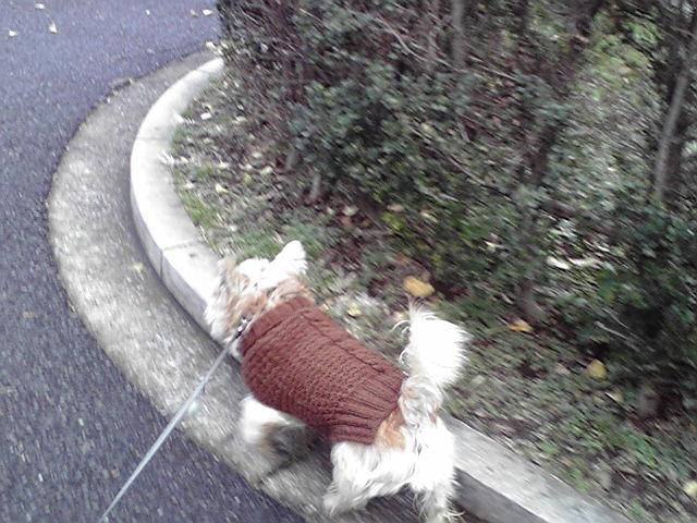 12月4日や小雨犬