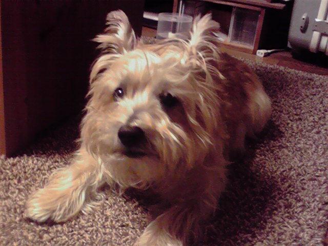 12月8日風が強い犬