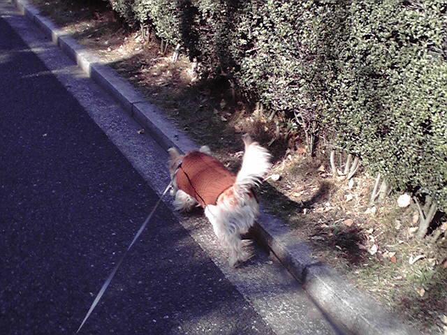 12月12日お腹が痛い犬