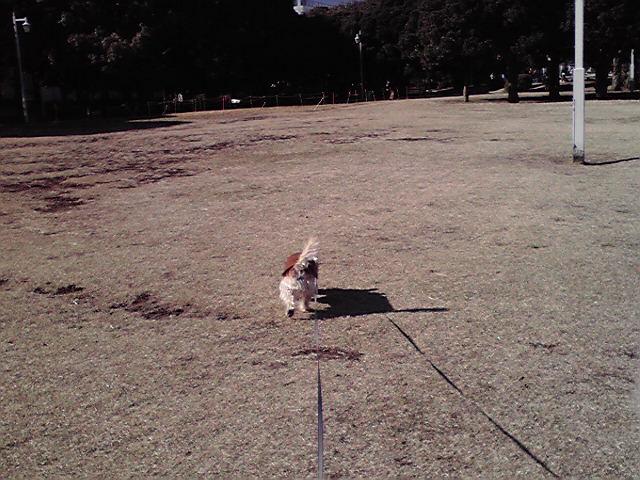12月12日復活犬