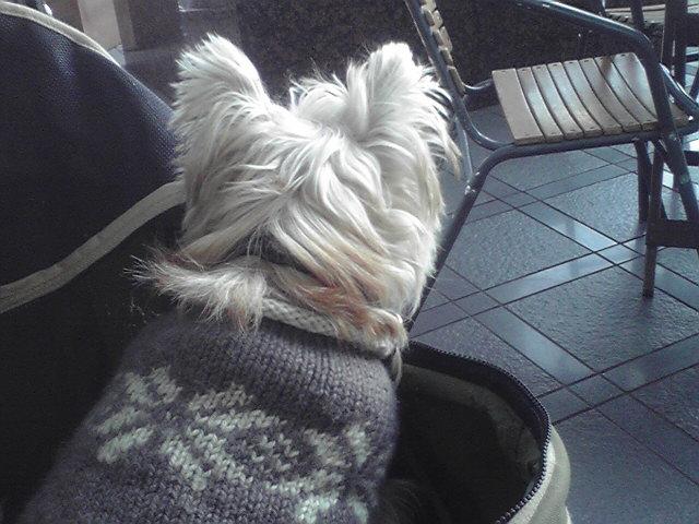 12月14日お誕生日会犬