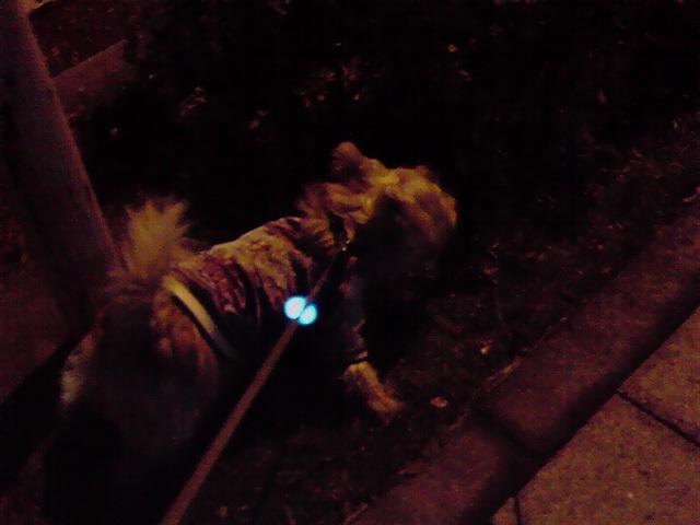 12月15日留守番犬