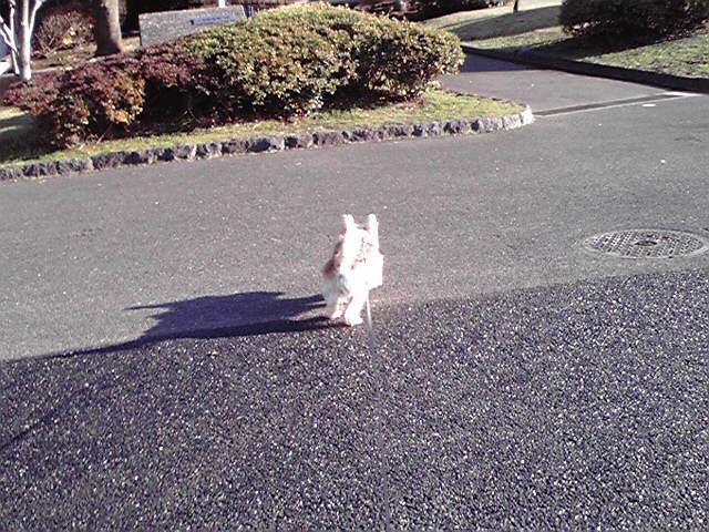 12月19日ヤバい犬