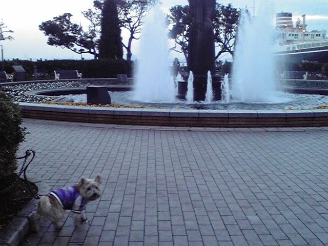12月22日雨上がりの犬