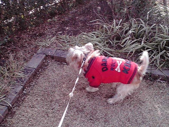 12月23日サンタ犬