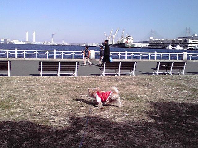 12月24日イヴ犬