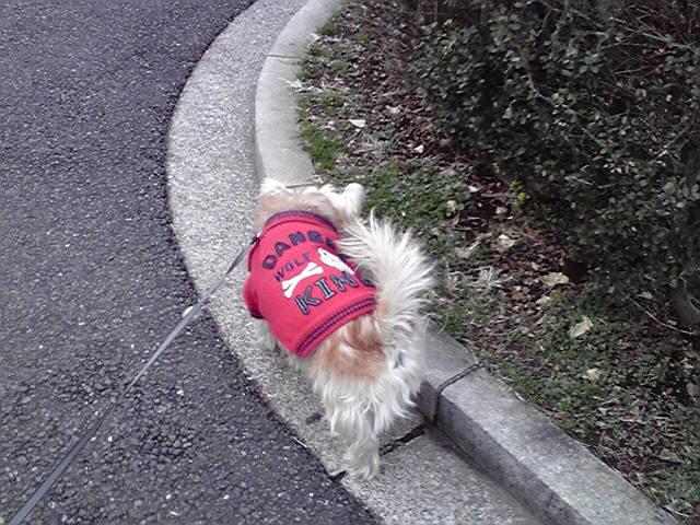 12月31日晦日犬