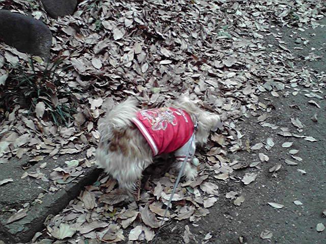 1月9日日常犬