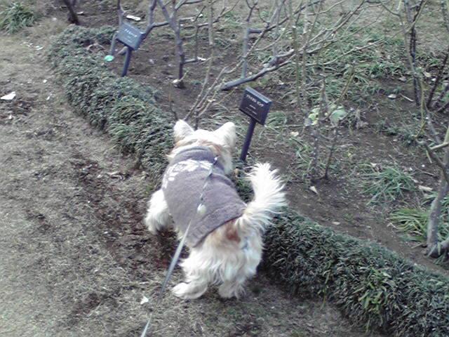 1月10日語る犬