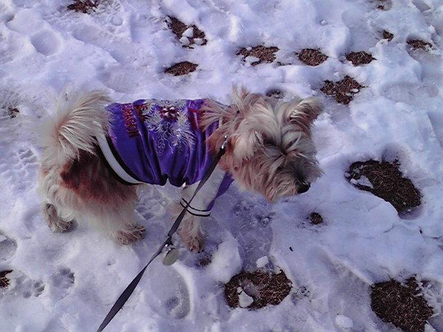 1月15日妖怪犬