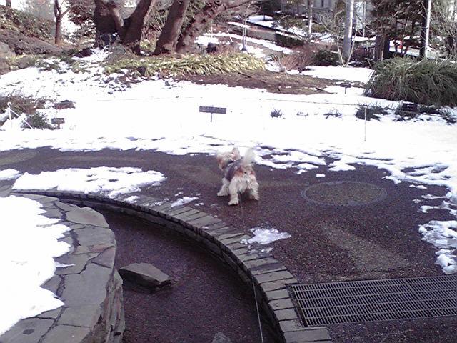 1月16日残雪犬