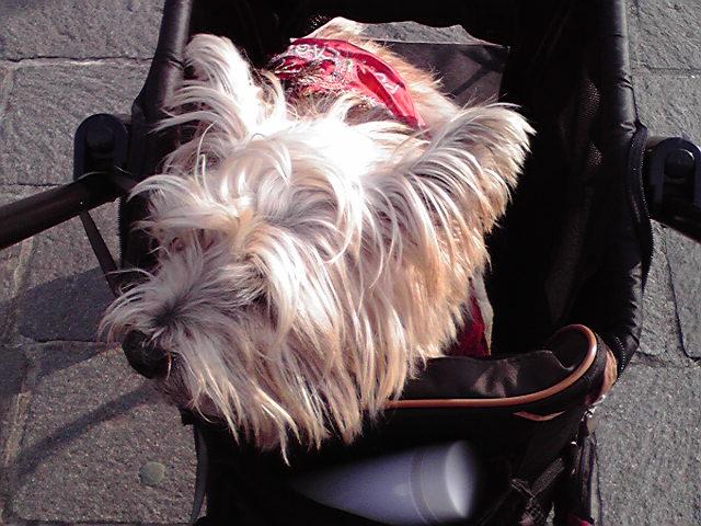 1月21日寒い犬