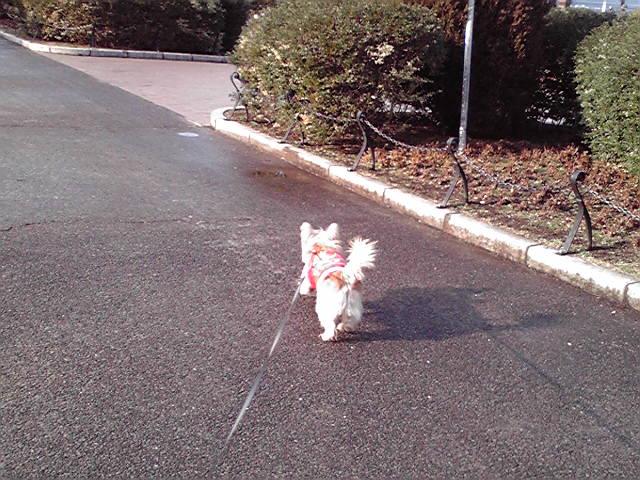 1月22日雨上がりの犬